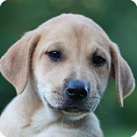 Adopt A Pet :: Monroe - ADOPTION IN PROGRESS - Bedminster, NJ