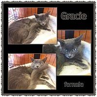 Domestic Longhair Cat for adoption in Richmond, California - Gracie