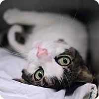 Adopt A Pet :: Leafy - New York, NY