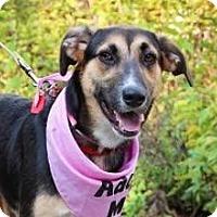 Adopt A Pet :: Bailey - Fort Atkinson, WI