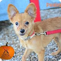 Adopt A Pet :: Paisley - Bradenton, FL