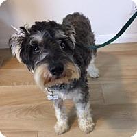 Adopt A Pet :: McGee - Redondo Beach, CA