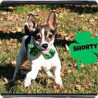 Adopt A Pet :: Shorty - Marion, KY