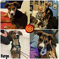 Adopt A Pet :: Fargo - Kimberton, PA