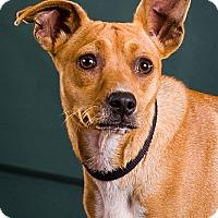 Adopt A Pet :: Tink - Owensboro, KY