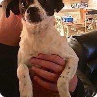 Poodle (Miniature) Mix Dog for adoption in Alpharetta, Georgia - Minnie Riperton