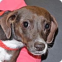 Adopt A Pet :: Rosie - Spokane, WA