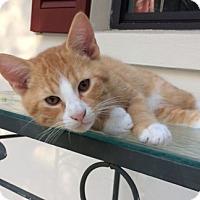 Adopt A Pet :: Bart - Oviedo, FL