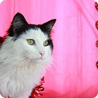 Adopt A Pet :: Bowser - Erwin, TN