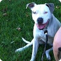 Adopt A Pet :: Asahi - La Habra, CA