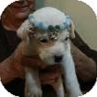 Adopt A Pet :: Princess Anna Belle - Marlton, NJ