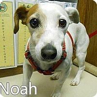 Adopt A Pet :: Noah - Bardonia, NY