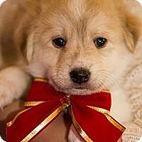 Adopt A Pet :: Reti - Saskatoon, SK