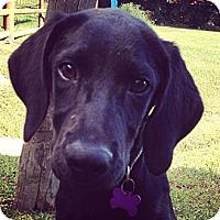 Adopt A Pet :: Isaac - Richmond, VA