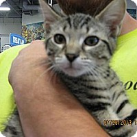Adopt A Pet :: Gizmo - West Dundee, IL