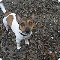Adopt A Pet :: Speedy - Cantonment, FL