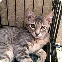 Adopt A Pet :: Jellibean - Fountain Hills, AZ