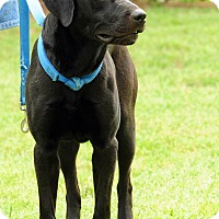 Adopt A Pet :: Bowie - Lewisville, IN
