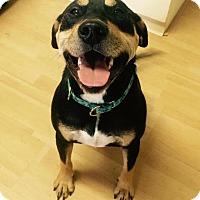 Adopt A Pet :: Rock in CT - East Hartford, CT
