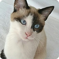 Adopt A Pet :: Lovebug - Davis, CA