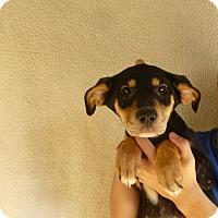 Adopt A Pet :: May - Oviedo, FL