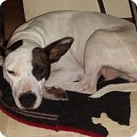 Adopt A Pet :: love Sparrow - Davisburg, MI