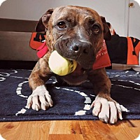 Adopt A Pet :: Lucy - Whitestone, NY