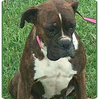 Adopt A Pet :: Darla - Brentwood, TN
