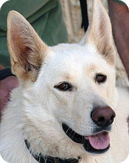 German Shepherd Dog Mix Dog for adoption in Palmdale, California - Stella