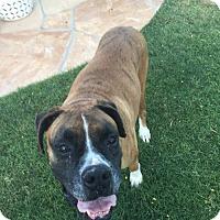 Adopt A Pet :: Luna 16 - Phoenix, AZ