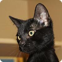 Adopt A Pet :: Sake - Los Angeles, CA