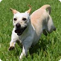 Adopt A Pet :: A - LADYBIRD - Portland, OR