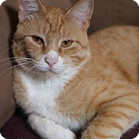 Adopt A Pet :: Remington - New Prague, MN