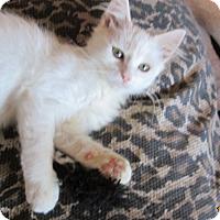 Adopt A Pet :: DANTE - San Diego, CA
