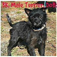 Adopt A Pet :: BK - Siler City, NC