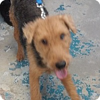 Adopt A Pet :: Remington - Franklin, NH