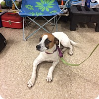 Boxer Mix Dog for adoption in Hohenwald, Tennessee - Rhapsody