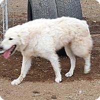 Adopt A Pet :: Keelii - Phoenix, AZ