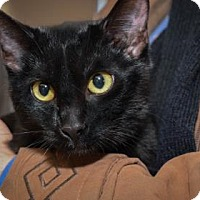 Adopt A Pet :: Nera - Wichita, KS