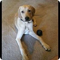 Adopt A Pet :: Spartigus - Morgantown, WV