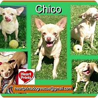 Adopt A Pet :: Chico - Leduc, AB