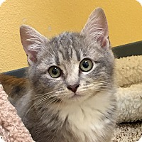 Adopt A Pet :: Pickle - Eastsound, WA