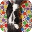 Photo 2 - Domestic Shorthair Kitten for adoption in Orlando, Florida - Mowgli