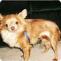 Adopt A Pet :: Taylor - Mooy, AL