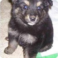 Adopt A Pet :: Bogi - Chandler, IN