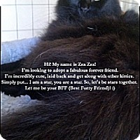 Adopt A Pet :: ZsaZsa - Houston, TX