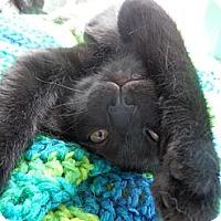 Adopt A Pet :: Micah - Fenton, MO