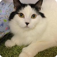 Adopt A Pet :: Stephanie - Atco, NJ