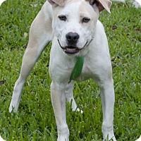 Adopt A Pet :: Trudy - Norwalk, CT
