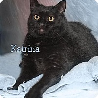 Domestic Shorthair Cat for adoption in Fort Mill, South Carolina - Katrina 5383